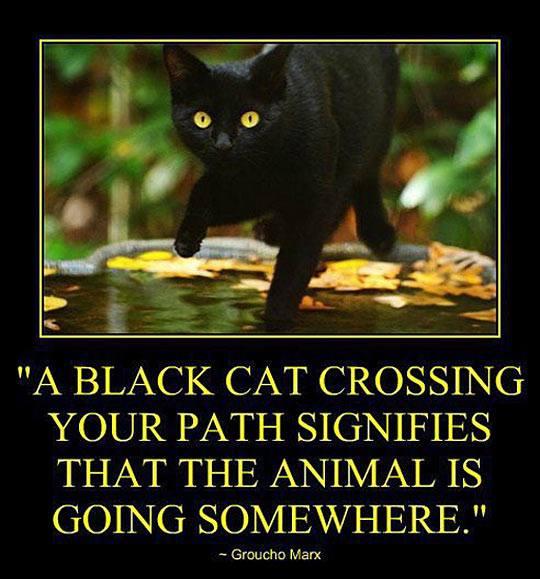 a-black-cat