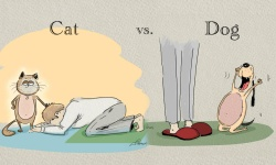 adaymag-cat-vs-dog-13