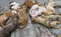dead-dogs1