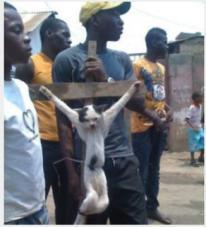 Muslims_Nigeria_Crucify_Cat