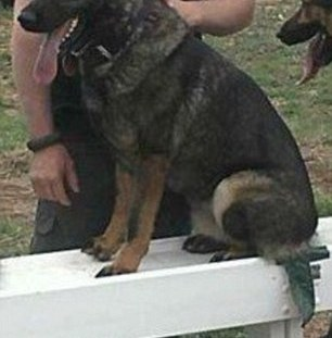 police-dog-back