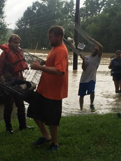 rescue-animals-drowning-louisiana-floods-10