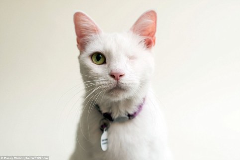 Daisy came from a hoarder with 200 cats and 100 dogs. She may only have one eye but she has a big heart to compensate