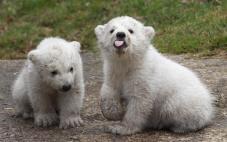 976906-bears