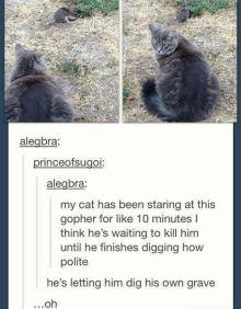 cat-and-gopher