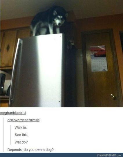 do-you-own-a-dog