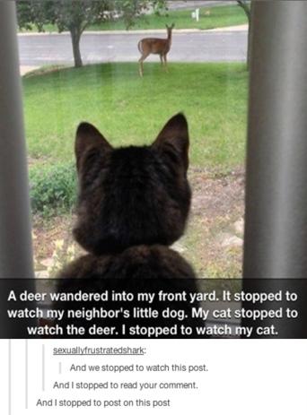 funny-cat-pics-watching-deer